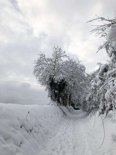 Sente_hivernale.jpg