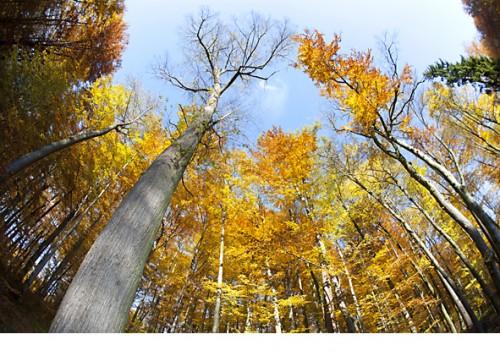 forêt_automne.jpg